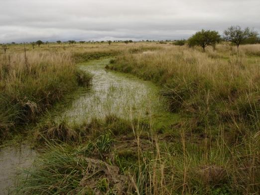 vegetación nativa en Mercedes, provincia de Corrientes